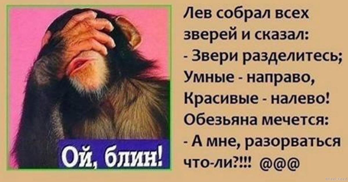 Умный к умному анекдот про обезьяну