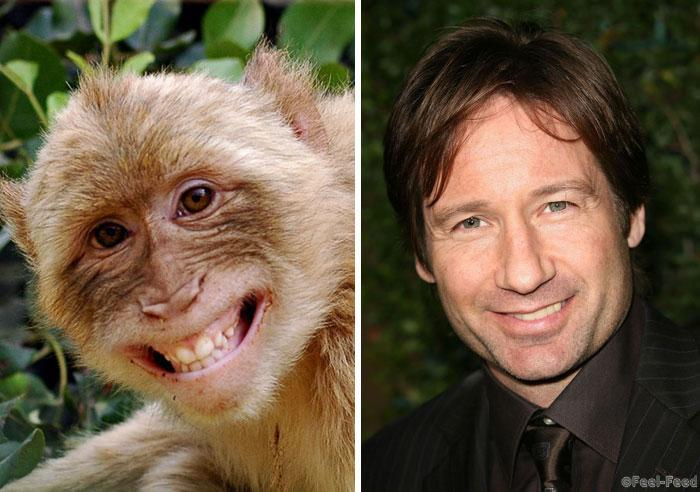 celebrity-animal-look-alikes-13
