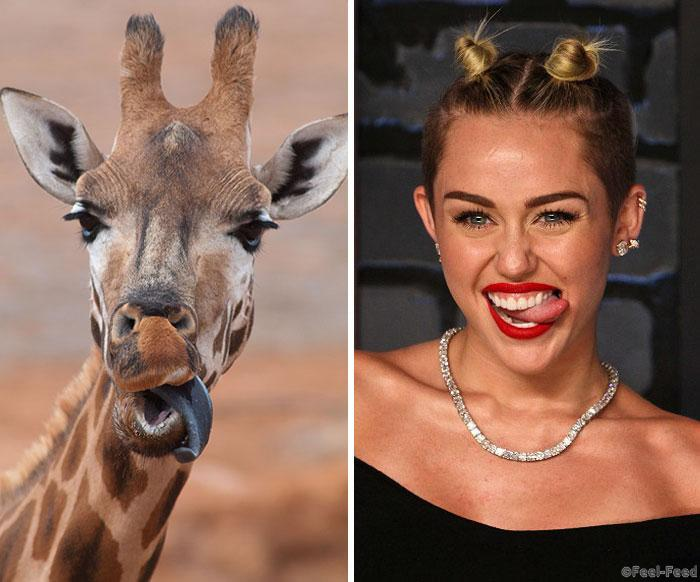 celebrity-animal-look-alikes-34