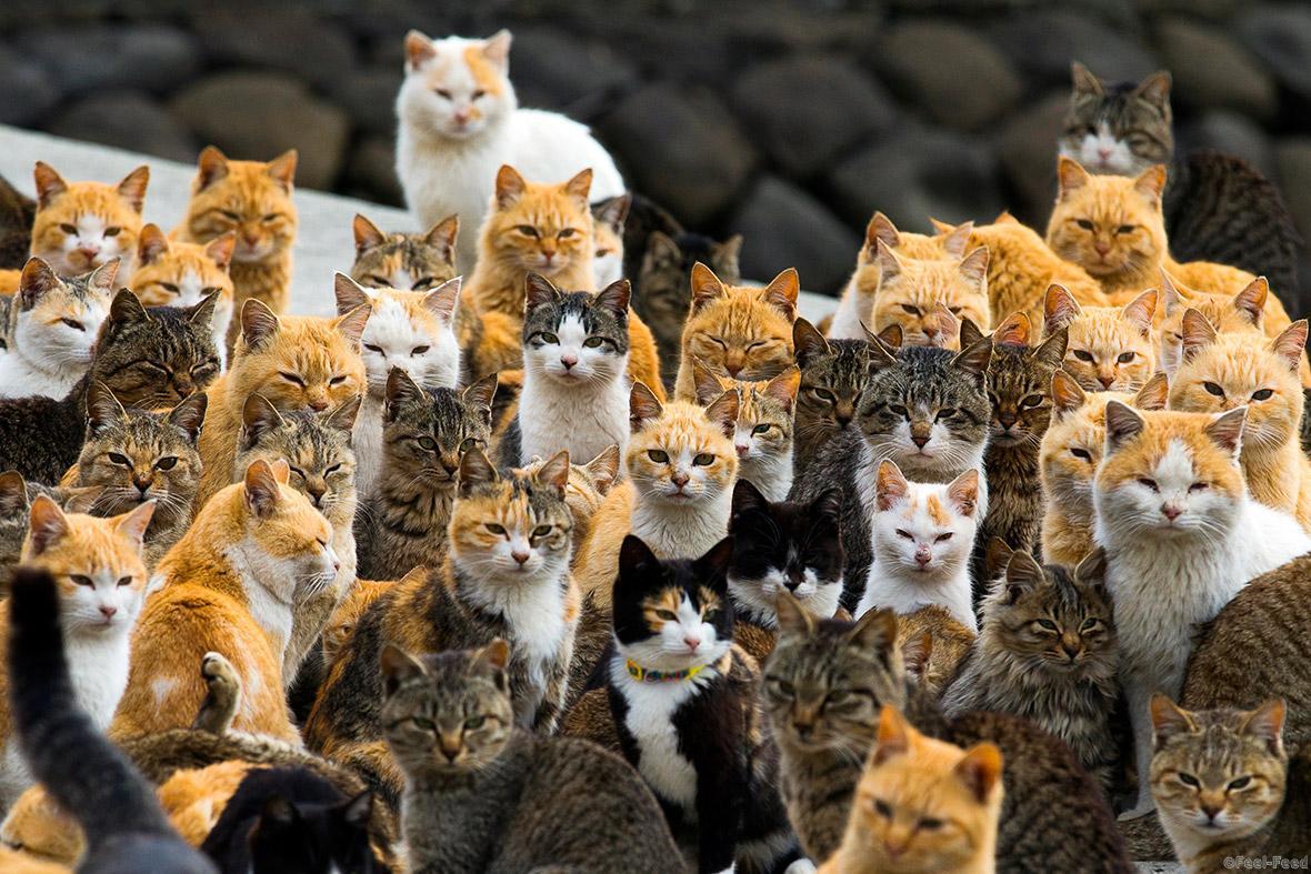 картинки кошачьих вшей