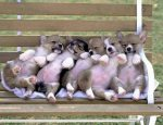 funny-dog-screensavers