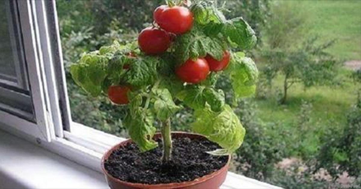 Огород на балконе - как обустроить и что можно вырастить.