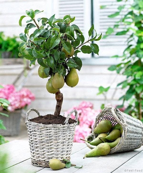 Что можно вырастить из фруктов в домашних условиях