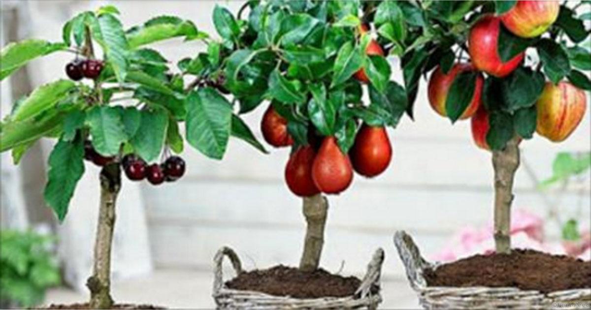 Выращивание личи в саду 38