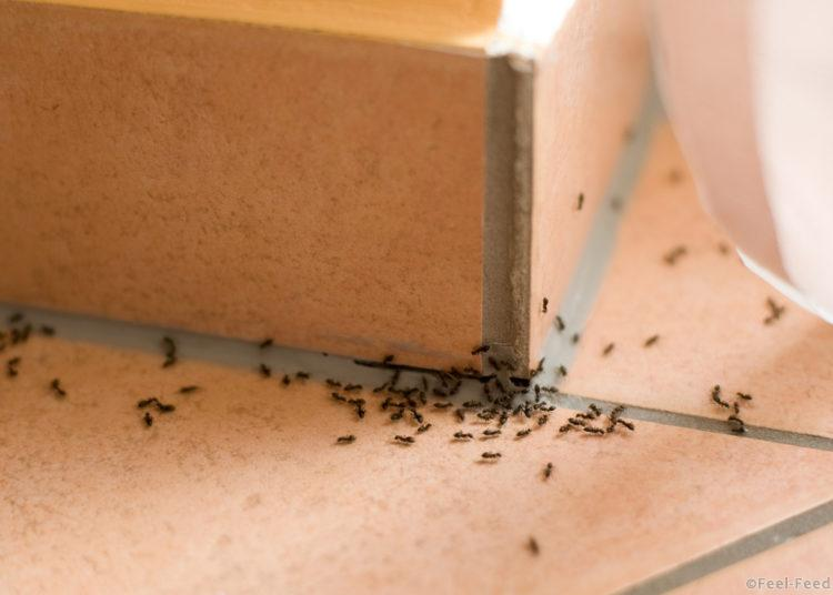 Как избавиться от муравьев в квартире в домашних условиях