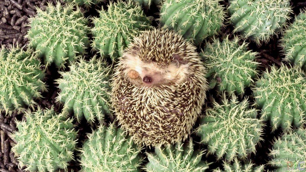 YOzhiki-sredi-kaktusov