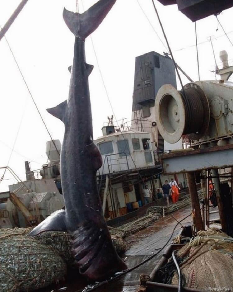 аддон для автоматической ловли рыбы